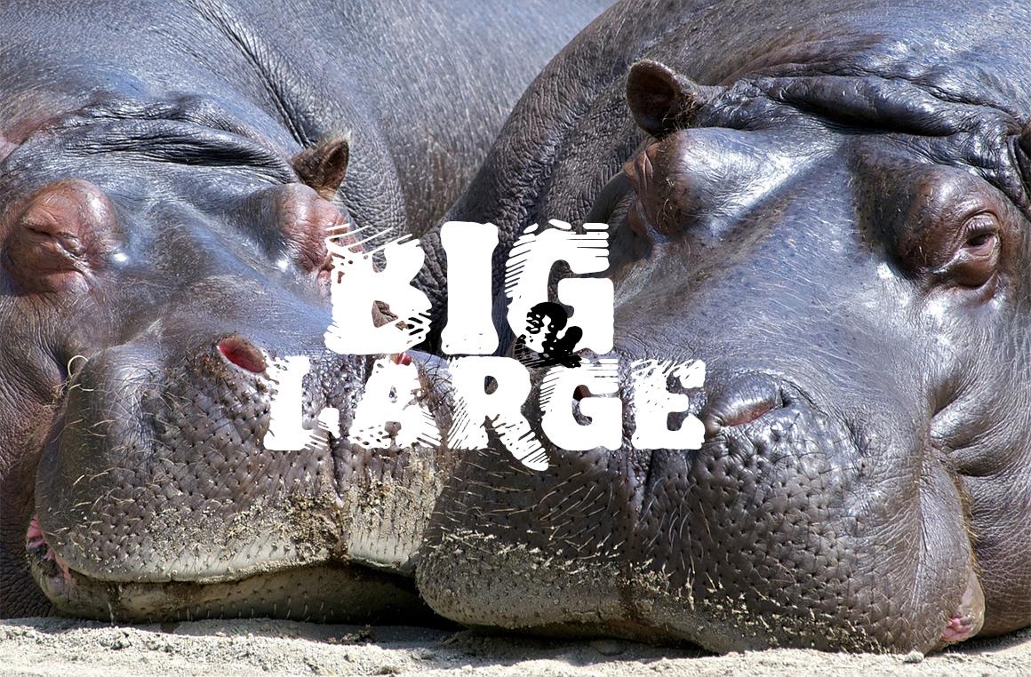 biglarge